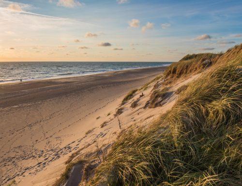 Dänemark mit dem Hund – Tipps, Fakten und traumhafte Ferienhäuser